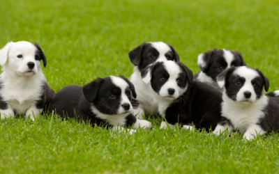 3 Cost-Effective Ways to Advertise your Dog-Breeding Business