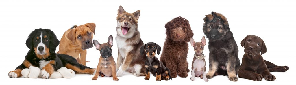 What is the best dog DNA test? Image 2 |VetDNACenter.com